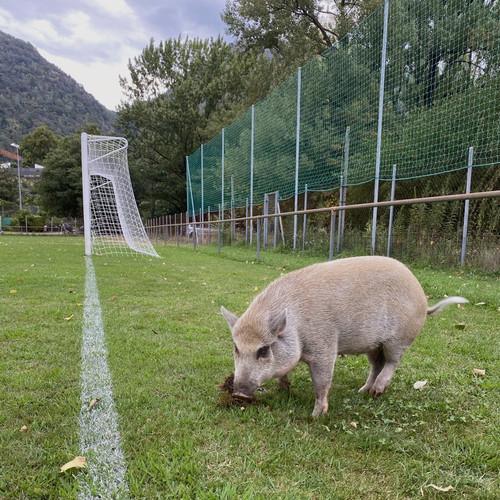 Incontro particolare al Campo Sportivo San Fedele