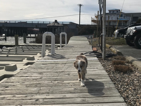 Maintenance at the marina.