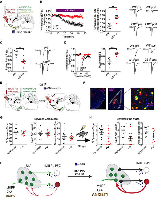Marcus Patel Neuron figure.jpg