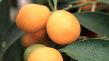 Seasonal Fruits and Veggies: Fall + Winter Eating