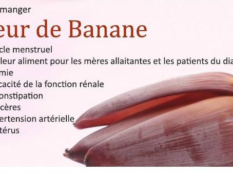 La Fleur de Banane