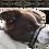 Thumbnail: Headcollars - Trimmed