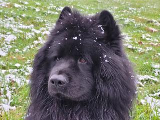 Es war ein weinig  Schnee heute