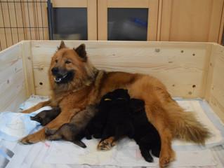Josie und ihre Babys(so süß)!!!!