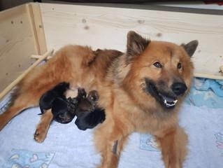 5 Puppis und eine Glückliche Josie(Endlich sind sie zuhause!)