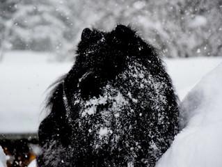 Ein traumhaften Urlaub im Schnee!