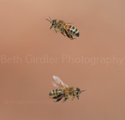 bees in the air