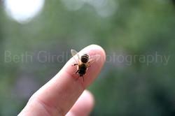 honey bee on my finger