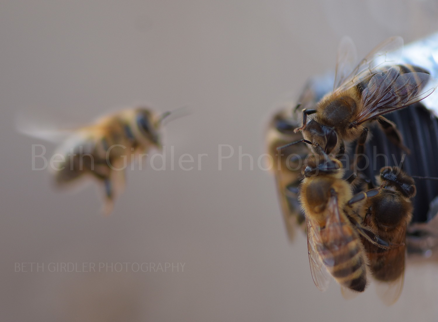 bees at the upper entrance, winter