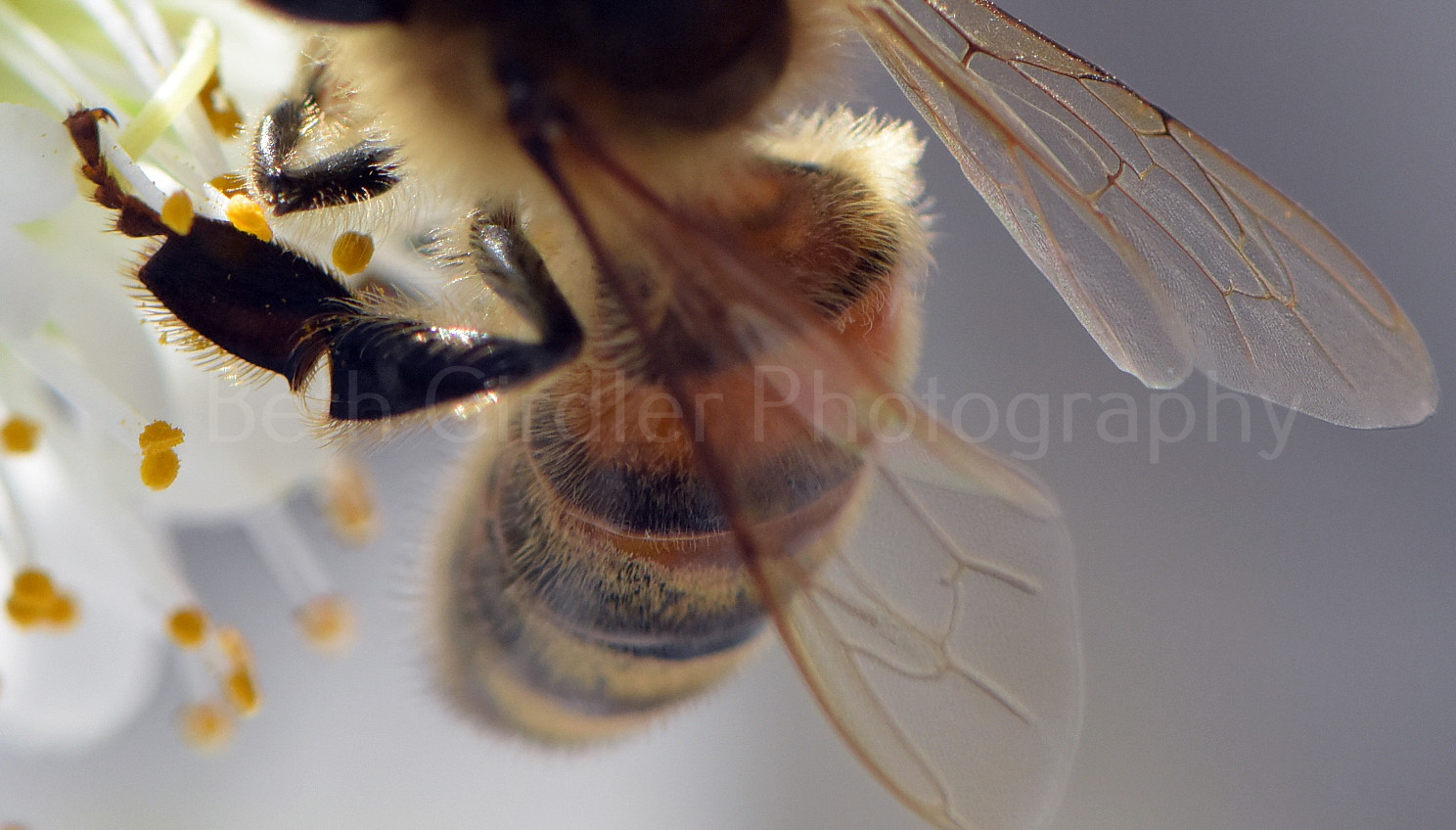 close up of bee leg
