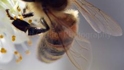 close up of bee leg