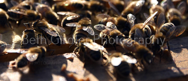 close up of honey bees