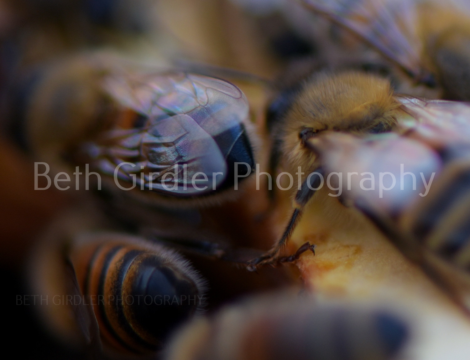 honey bees on frames close up