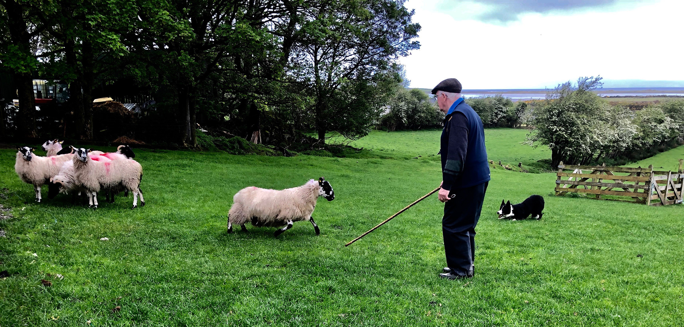 Ireland005.jpg