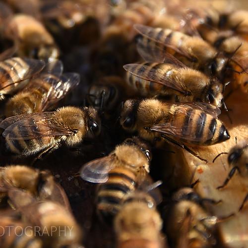 Debbee's Bees