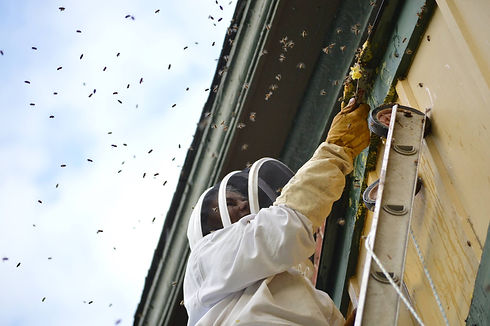 woman rescuing bees