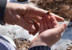 honey bee on child's hand