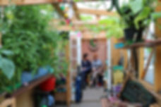 Image description: green house filled with plants, coloured fairy lights. At the back 2 people sit together reading a book