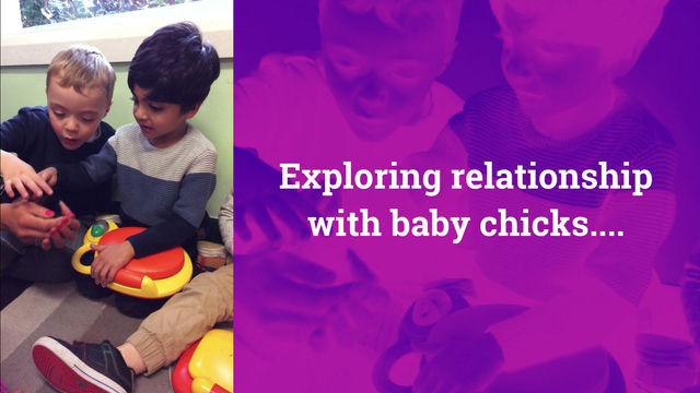 Exploring relationships with baby chicks and showing our love and care.