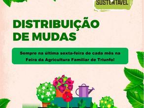 Secretaria de Agricultura e Meio Ambiente de Triunfo disponibiliza mudas de árvores nativas e frutíf