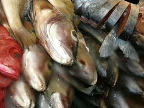 Operação Semana Santa fiscaliza qualidade do pescado em 13 estados