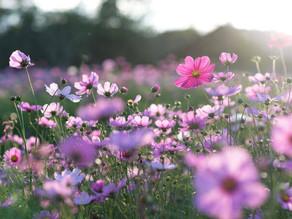 Dicas de cuidados com a saúde para a primavera