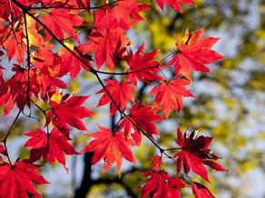 Outono começa nesta terça-feira; veja a previsão para o nordeste