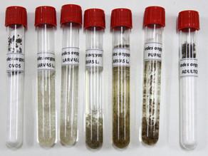 Sobe para 53 o número de casos confirmados de dengue em Pernambuco