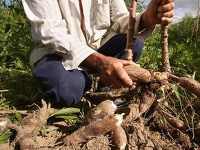 Pernambuco cria grupo de trabalho para agilizar cadastro ambiental