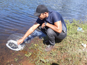 Secretaria de Agricultura distribui 70.000 alevinos das espécies Tambaqui e Curimatã para alguns agr
