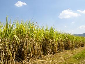 Produção de etanol deve crescer 23% em Pernambuco