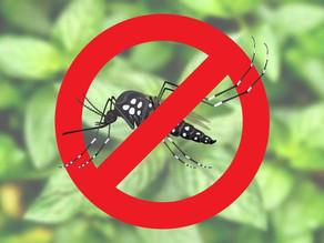 Dicas de como não tornar o seu lixo um foco de proliferação do Aedes aegypti