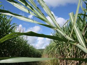 Produção de etanol deve crescer 28%