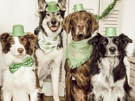 St. Paddy's Day Has Gone To The Dogs