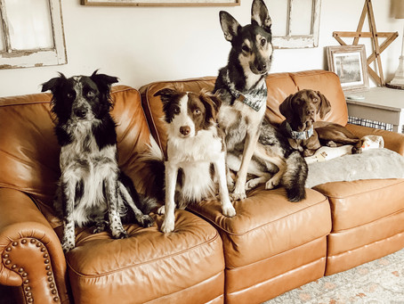 """House Rules"" With Dogs And Why They're Important"