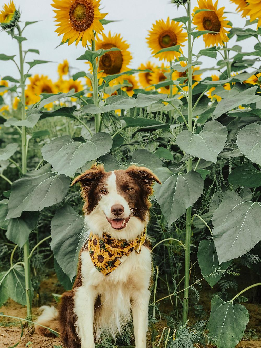 celebrating national dog day