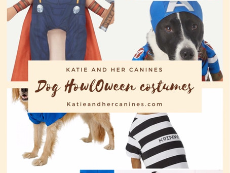 Halloween Canine Costume ideas