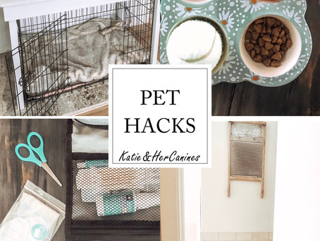 Easy Pet Hacks For Dog Owners