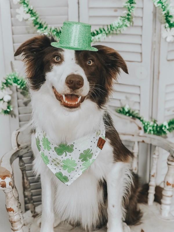 Dog-friendly st patricks day MN