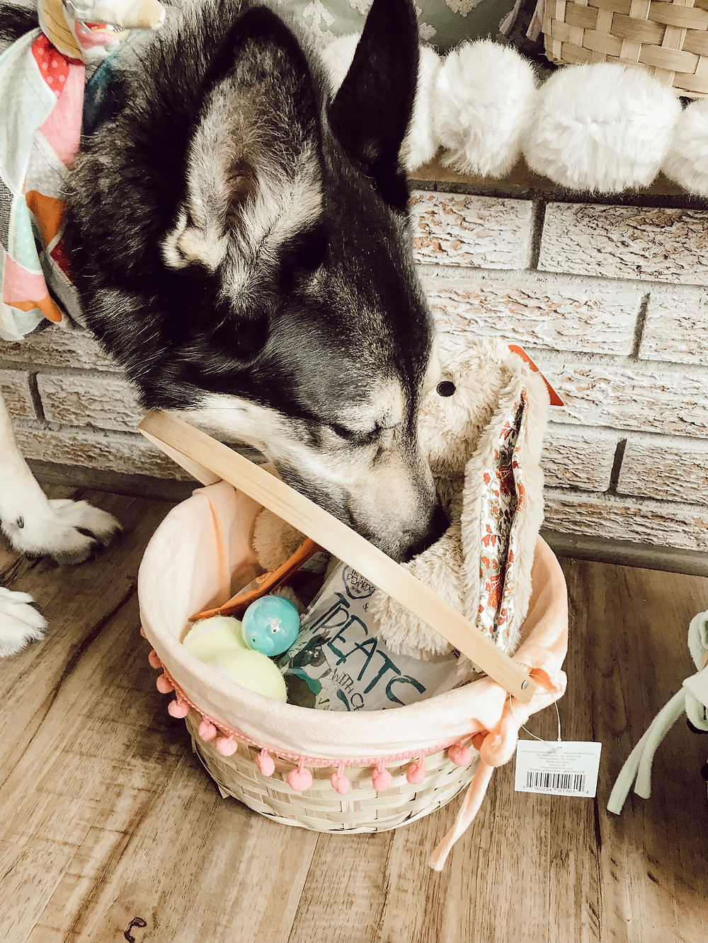 Dog Eater Basket