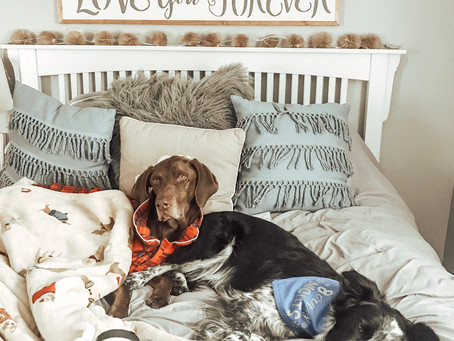 Gifts To Give The Dog Lover In Your Life