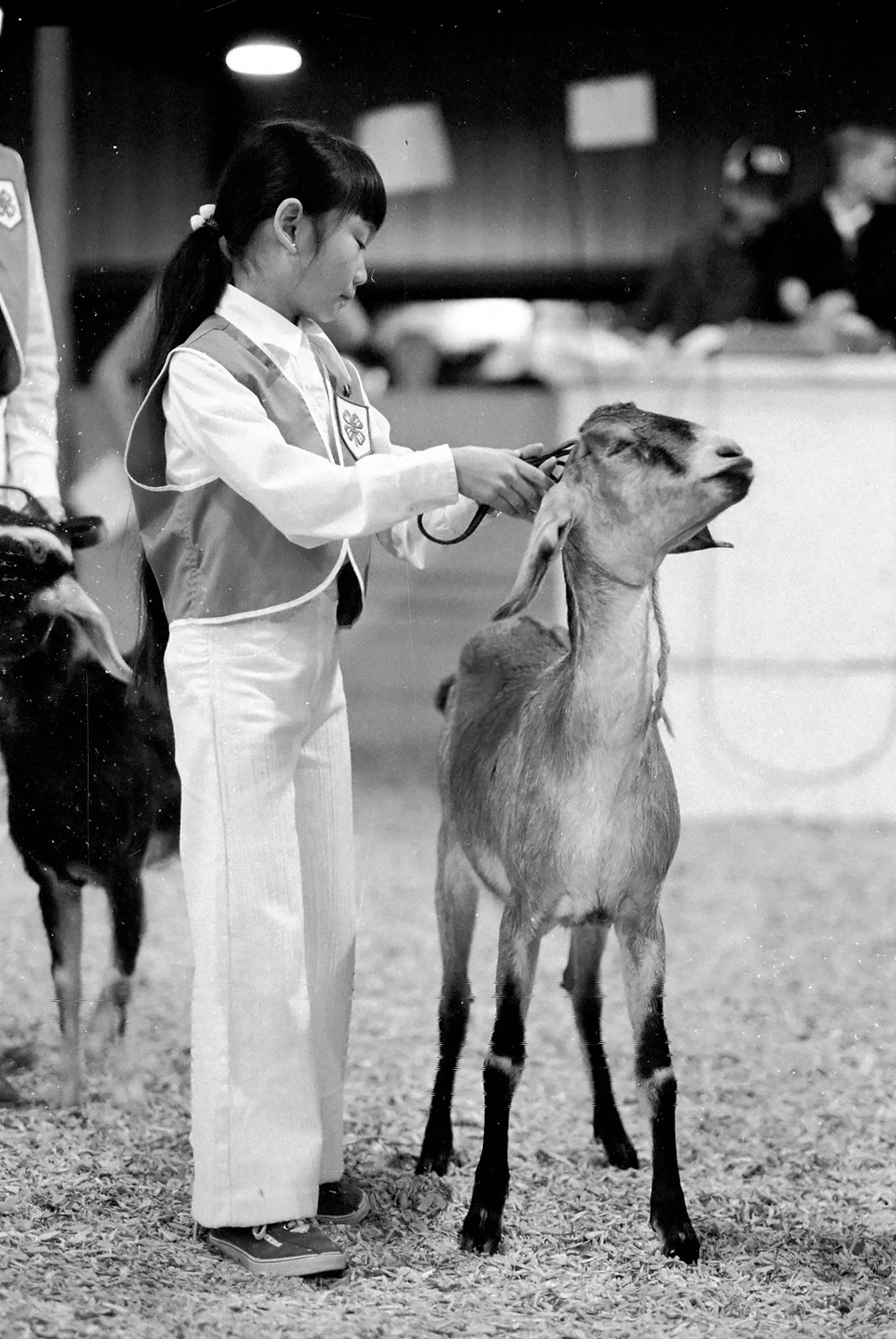 child in 4-h uniform showing a goat