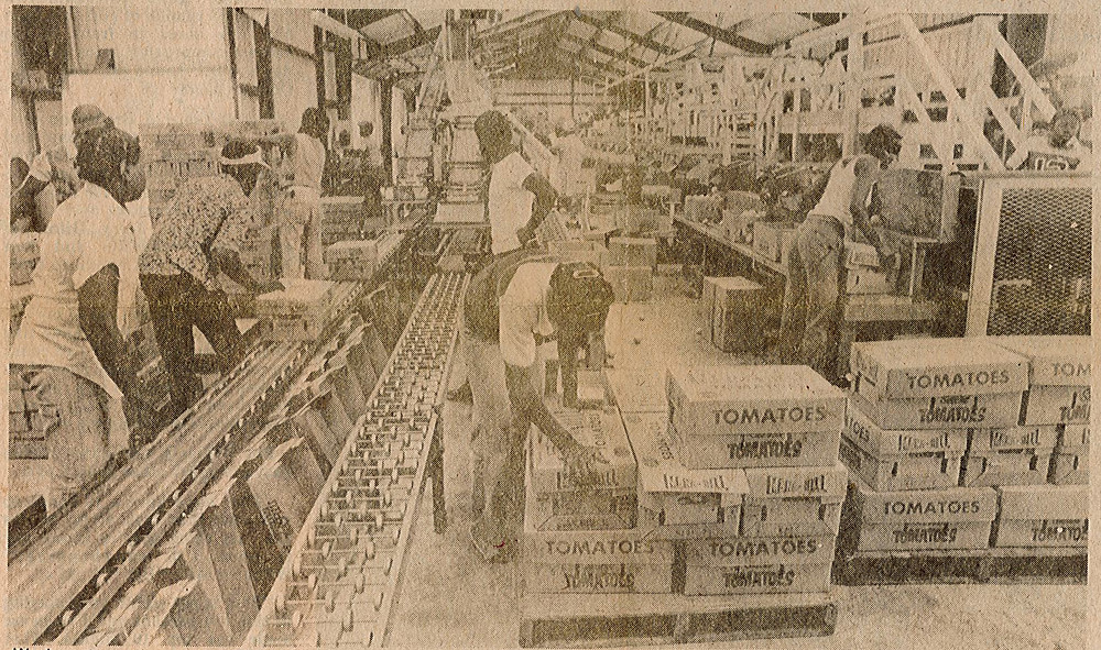 interior of a warehouse with conveyor belts and boxes labeled tomatoes. Many workers can be seen.