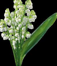 Imagem da flor Lírio-do-vale.