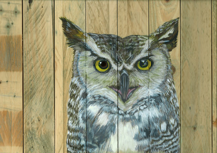 Owl on wooden pallets