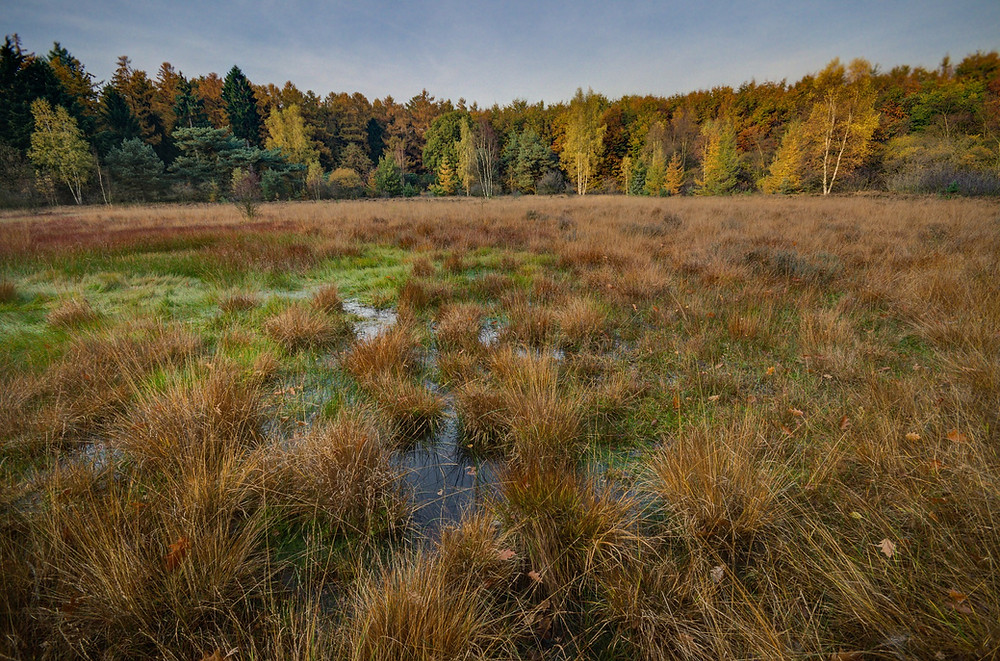 wetland surrounded by forest