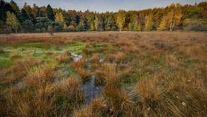 Inventaire des zones humides du SAGE Allier aval : consultation du public