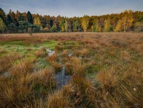 L'importance des milieux humides