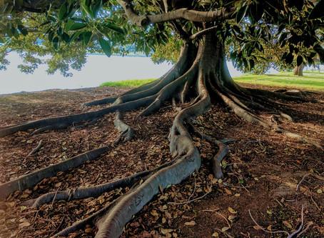 #DailyWritingChallenge: Roots