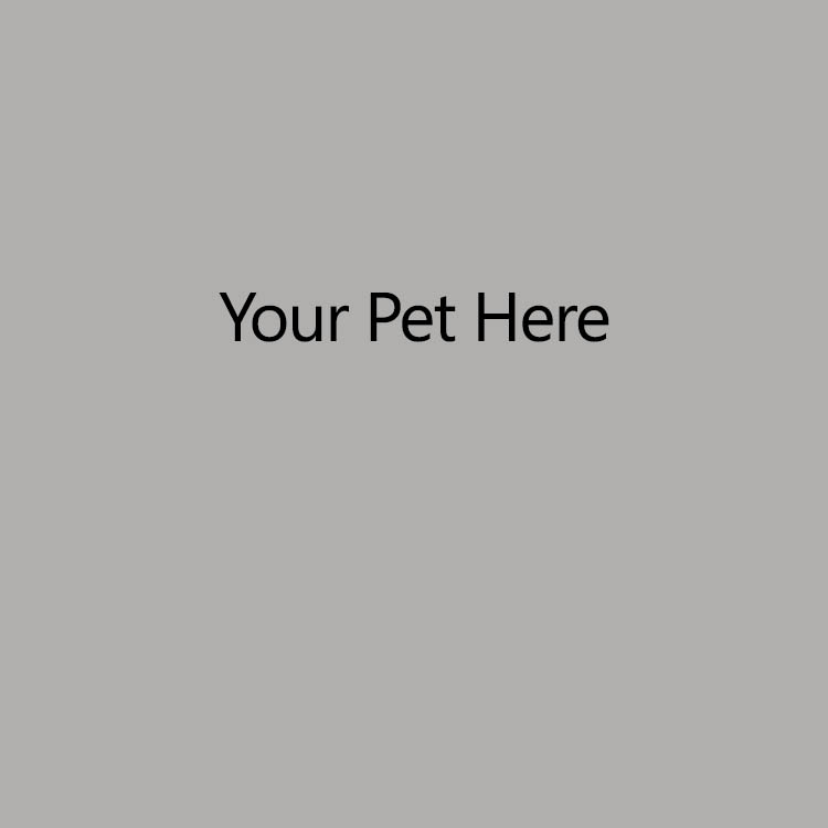 Your Pet Here
